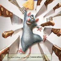 روش های مبارزه با موش ها