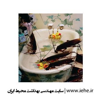 سوسک حمام