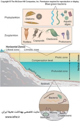 میکروبیولوزِی محیط