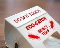 مبارزه با حشرات و جوندگان در بیمارستان