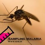 نمونه گیری در مالاریا Sampling malaria + پاورپوینت رایگان