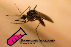 نمونه گیری در مالاریا Sampling malaria