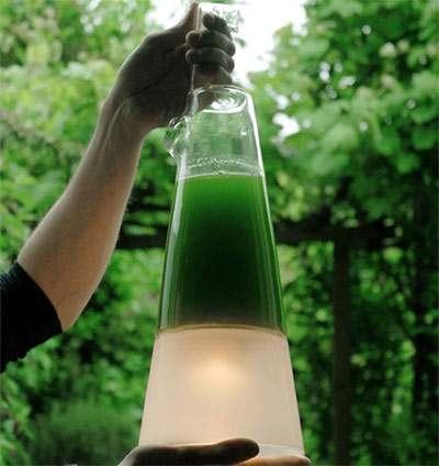 پاورپوینت کاربرد جلبک در تولید انرژی
