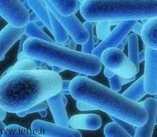 باکتری لژیونلا عامل بیماری لژیونر و تب پونتیاک Legionella