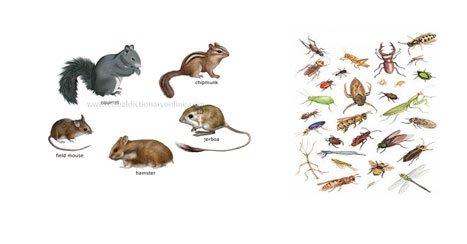 مخاطرات بیولوژیک:در مراحل تولید ، توزیع ، و عرضه مواد غذایی