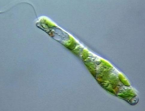 میکرو ارگانیسم سیستم لجن فعال در تصفیه فاضلاب لجن فعال+pdf فرایند لجن فعال انواع لجن فعال ارزیابی عملکرد روش لجن فعال در تصفیه فاضلاب لجن فعال متعارف