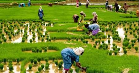 دانلود رایگان پاورپوینت آماده بهداشت کشاورزی ppt پاورپوینت رایگان بهداشت کشاورزی pdf