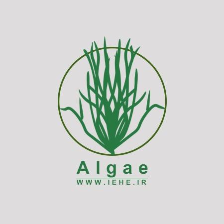 کاربرد جلبک که هم غذا است و هم سوخت در نجات کره زمین,Sapphire Energy,جلبک تولید سوخت و غذا
