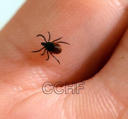 تب خونریزی دهنده کریمه کنگو ، راههای مراقبت از بیماری کنگو کریمه CCHF