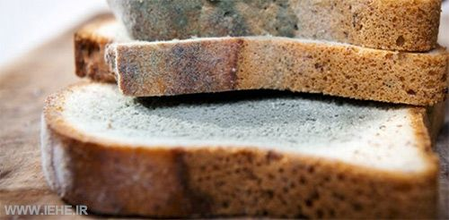 کپک نان افلاتوکسین نان آفلاتوکسین در نان کپک زدن نان دلیل کپ نان قارچ نان ُپرژیلوس فلاوس ریزوپوس استلونیفر